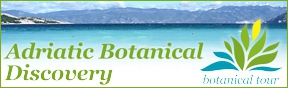 Adriatic Botanical Discovery